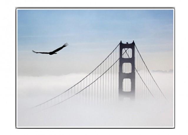 Aigle survolant le Golden Gate - 66 x 50 cm