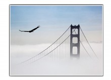 Eagle over the Golden Gate - 66 x 50 cm