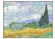 Champ de blé avec cyprès - 60 x 45 cm
